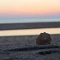 Seashell Before Sunrise by Robert Banach