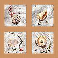 Seashell Collection II by Irina Sztukowski