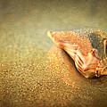 Seashell by Joye Ardyn Durham