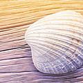 Seashell by Lutz Baar
