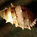 Seashell On Granite by Laura Yamada