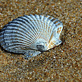 Seashell On The Beach by Bill Swartwout Photography
