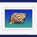 Seashell Wall Art 1 - Blue Frame by Kaye Menner
