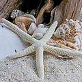 Seashells And Driftwood 2 by Randy Walton