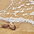 Seashells And Lace by Kaye Menner