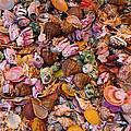Seashells by Anthony Sacco
