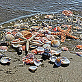 Seashells by Athena Mckinzie