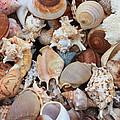 Seashells - Vertical by Carol Groenen