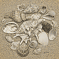 Seashells Collection Drawing by Sandi OReilly