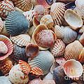 Seashells by David N. Davis
