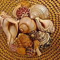 Seashells by Denise Mazzocco