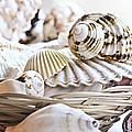 Seashells by Elena Elisseeva
