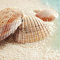 Seashells In The Wet Sand by Sandra Cunningham