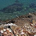 Seashells by Luis Alvarenga