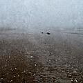 Seashells On Foggy Beach by Annie Adkins