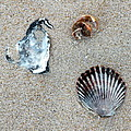 Seashells On The Beach by Kim Bemis