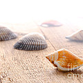 Seashells On Wood Dock by Olivier Le Queinec
