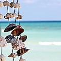 Seashells by Sophie Vigneault