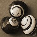 Seashells Spectacular No 28 by Ben and Raisa Gertsberg