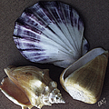 Seashells Spectacular No 30 by Ben and Raisa Gertsberg