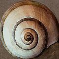 Seashells Spectacular No 34 by Ben and Raisa Gertsberg