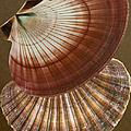 Seashells Spectacular No 53 by Ben and Raisa Gertsberg