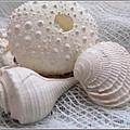 Seashells Study 1 by Danielle  Parent