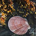 Seashore by Alana Ranney