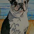 Seaside Harold by Susan Herber