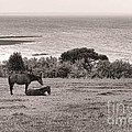 Seaside Horses by Olivier Le Queinec