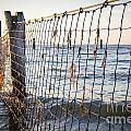 Seaside Nets by Tim Hester