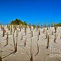 Seaside Sand Dunes by Gary Keesler