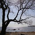 Seaside Tree In Connecticut Long Island Sound by Kim Chernecky