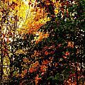 Season Of Color by John Potts