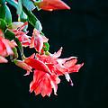 Seasonal Bloom by E Faithe Lester