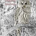 Season's Greetings Card Winter Barred Owl by Jennie Marie Schell