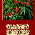 Season's Greetings Holiday Card - Crocosmia by Mother Nature