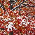 Seasons Of Change by Bill Sherrell