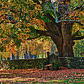 Seated Under The Fall Colors by Jeff Folger