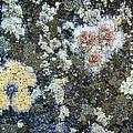 Seawall Abstract by Carolyn Marshall