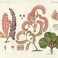 Seaweed Different Kinds by Splendid Art Prints