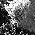 Seaweed by Jacin Buchanan