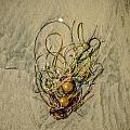 Seaweed On Sandy Canvas  by Roxy Hurtubise