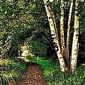 Sechelt Marsh Path by Stanley  Funk