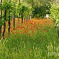 Secret Garden by Carol Weitz