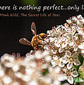 Secret Life Of Bees by Janice Pariza