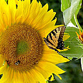Secret Lives Of Sunflowers 2 by Kim Bemis