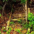 Secret Stairway by Bartz Johnson