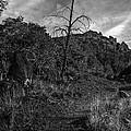 Secret Wilderness Sedona Arizona by Bob and Nadine Johnston