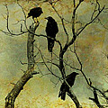 Secretive Crows by Gothicrow Images